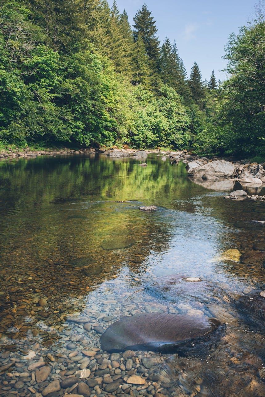 the Calawah river