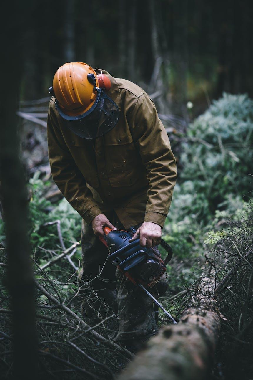 Neill cutting timber