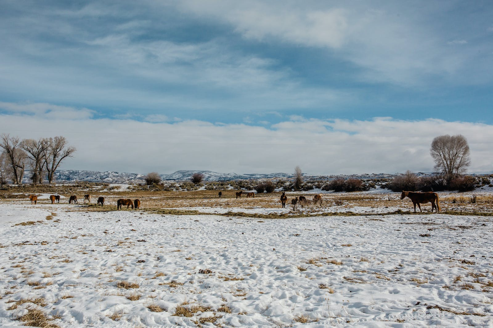 Filson Life - Winter in Wyoming