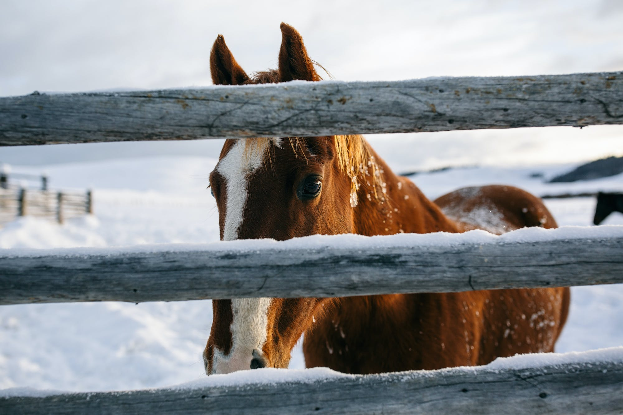Filson Life - Winter Horse