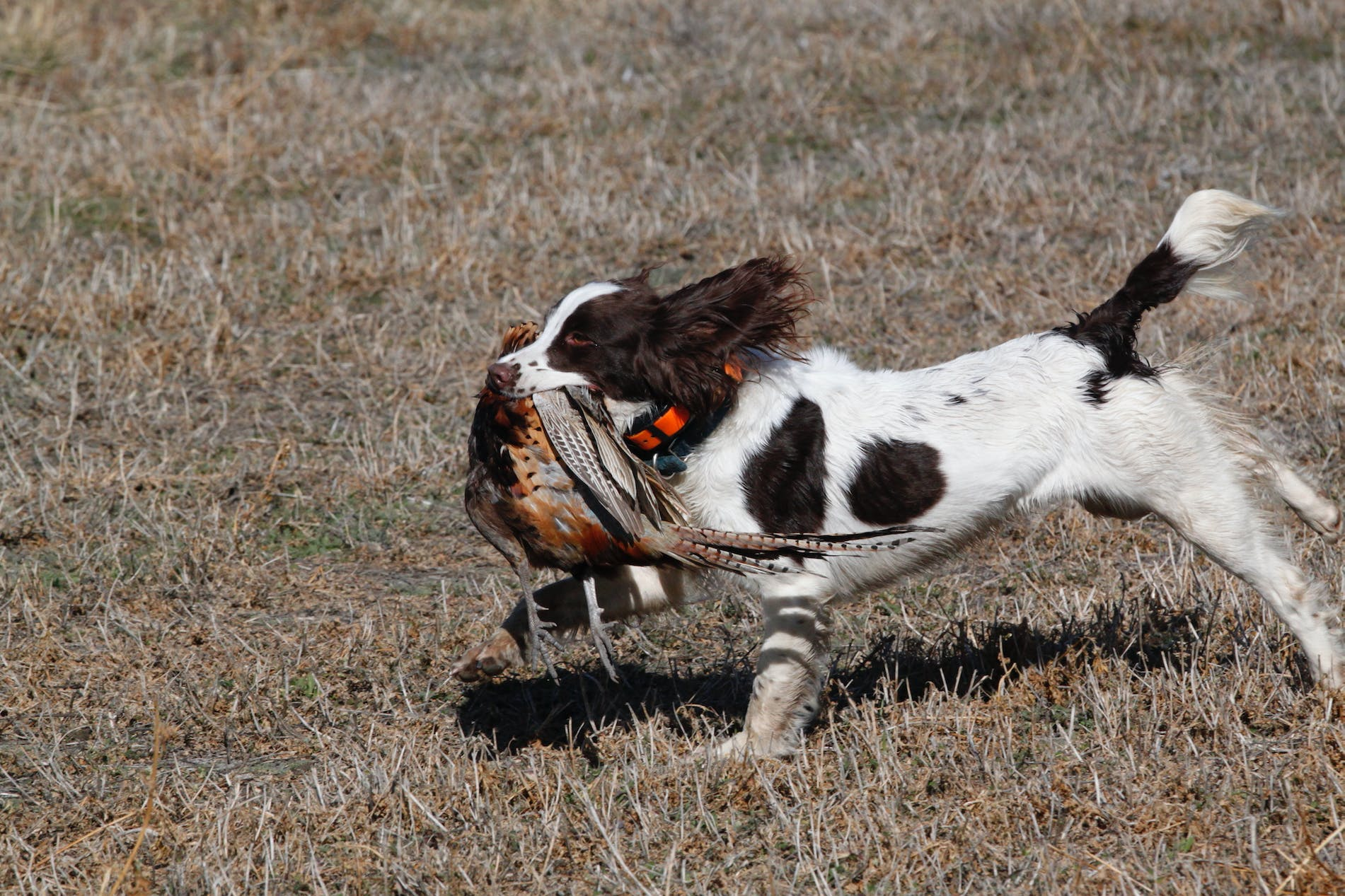 Filson Life - Bird Dog Training