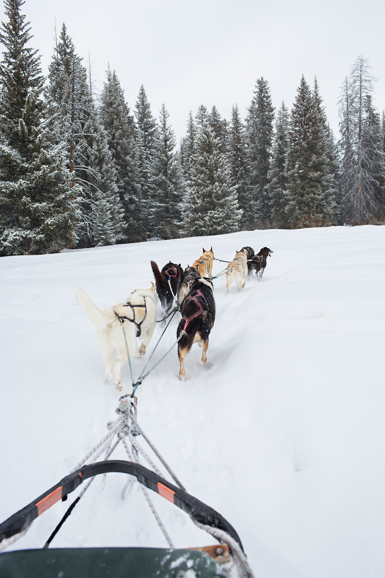 Sled dogs pulling a sled through deep snow.