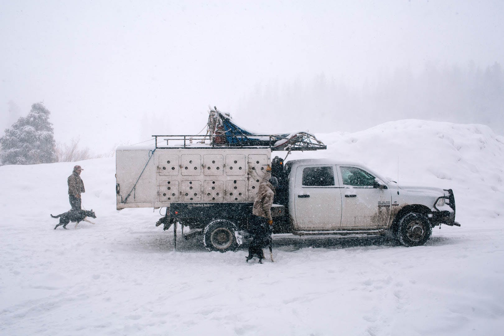 Rugged truck with dog cages on the back parked in the snow. Snow falls with wintery, blizzard like conditions.