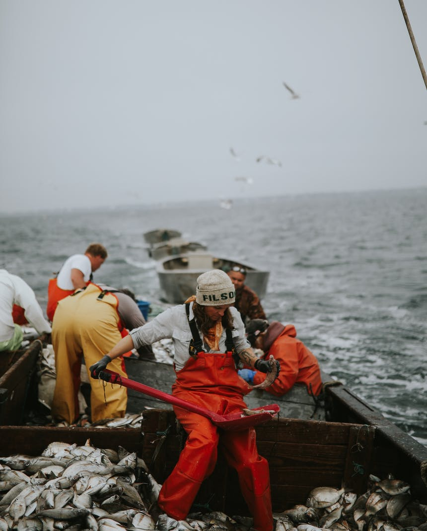 sorting fish on deck of boat with many fish