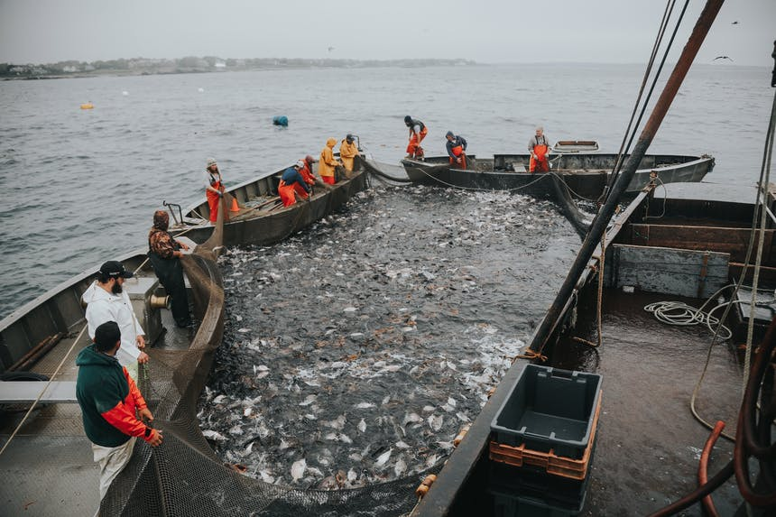 sorting fishin large net with three boats surrounding it