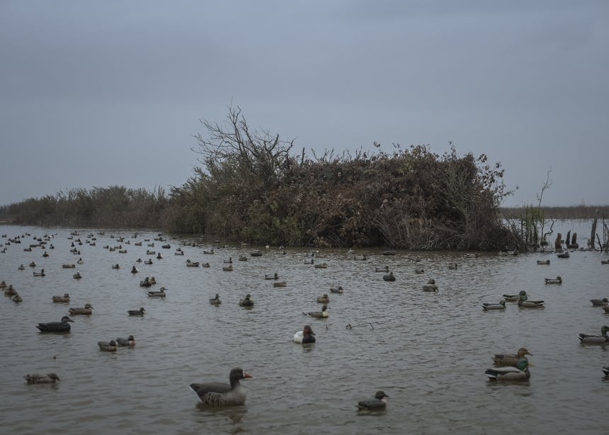 duck blind in surrounded by water and ducks