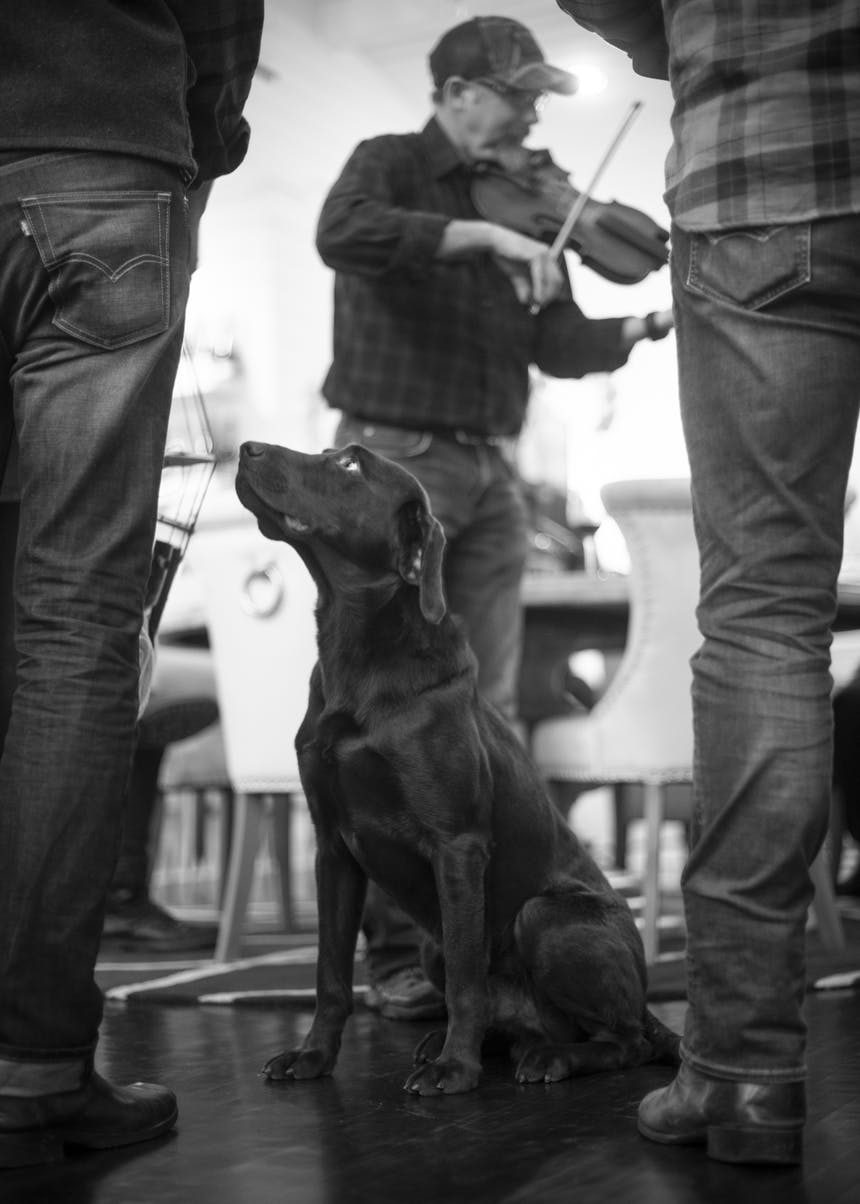dog listening to a man play the fiddle