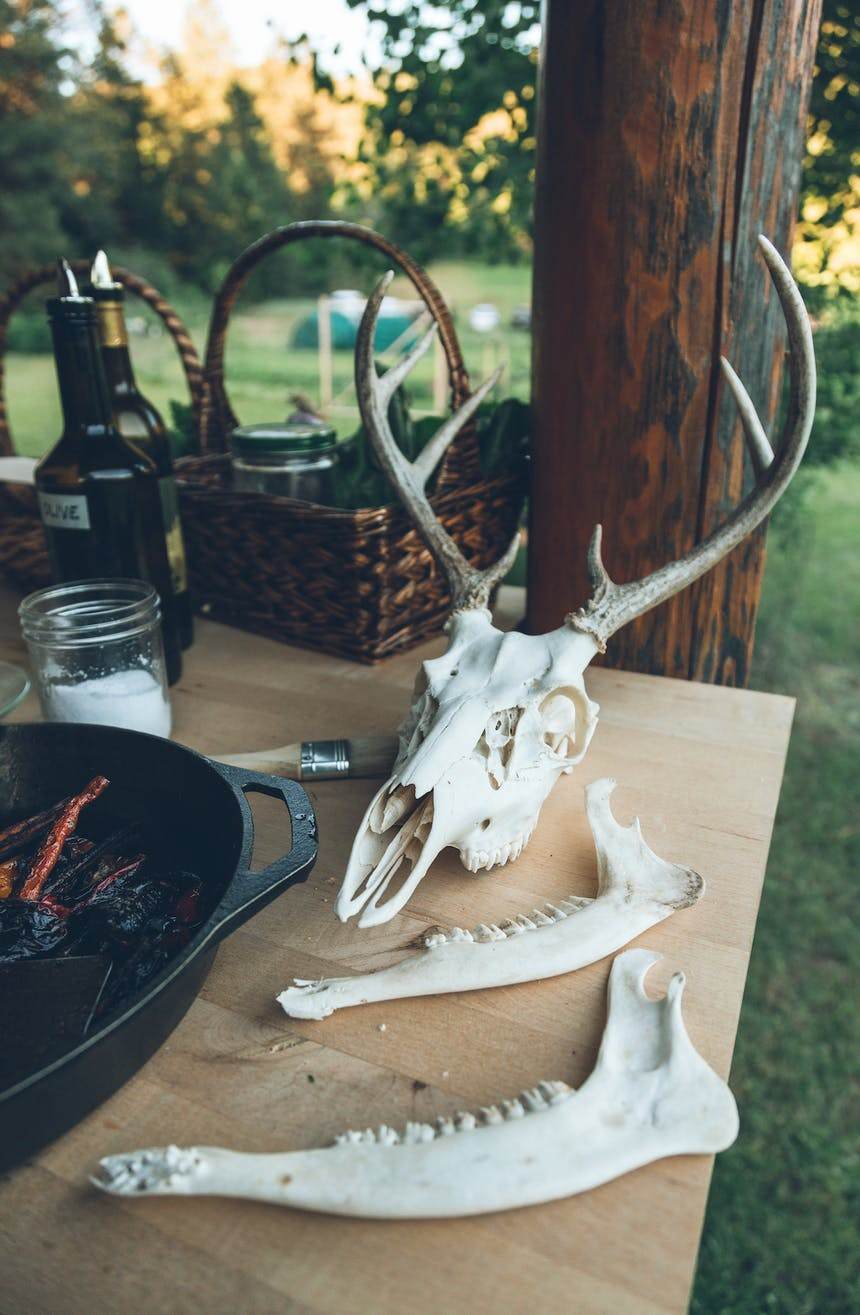 whitetail deer antlers and jaw bones on table