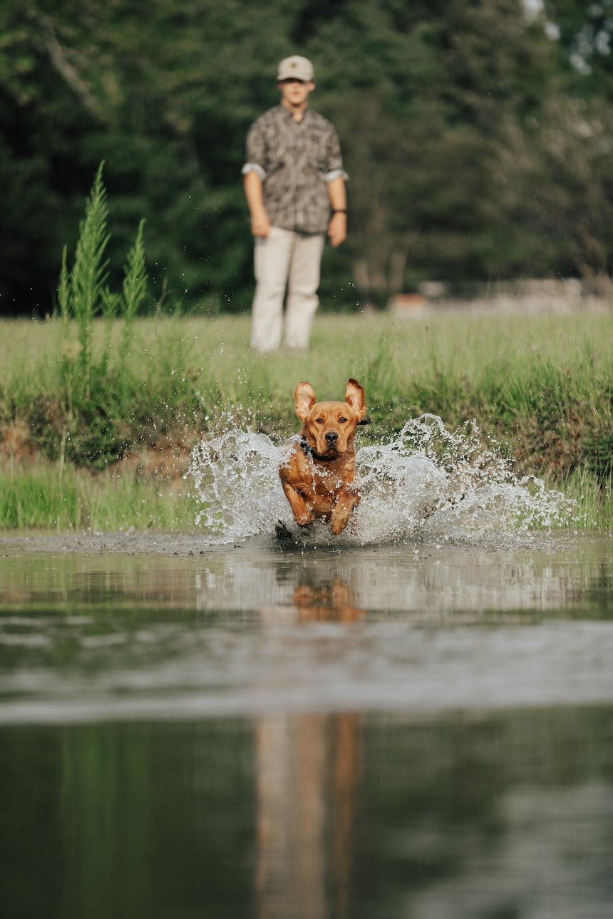 dog on retrieve in river water