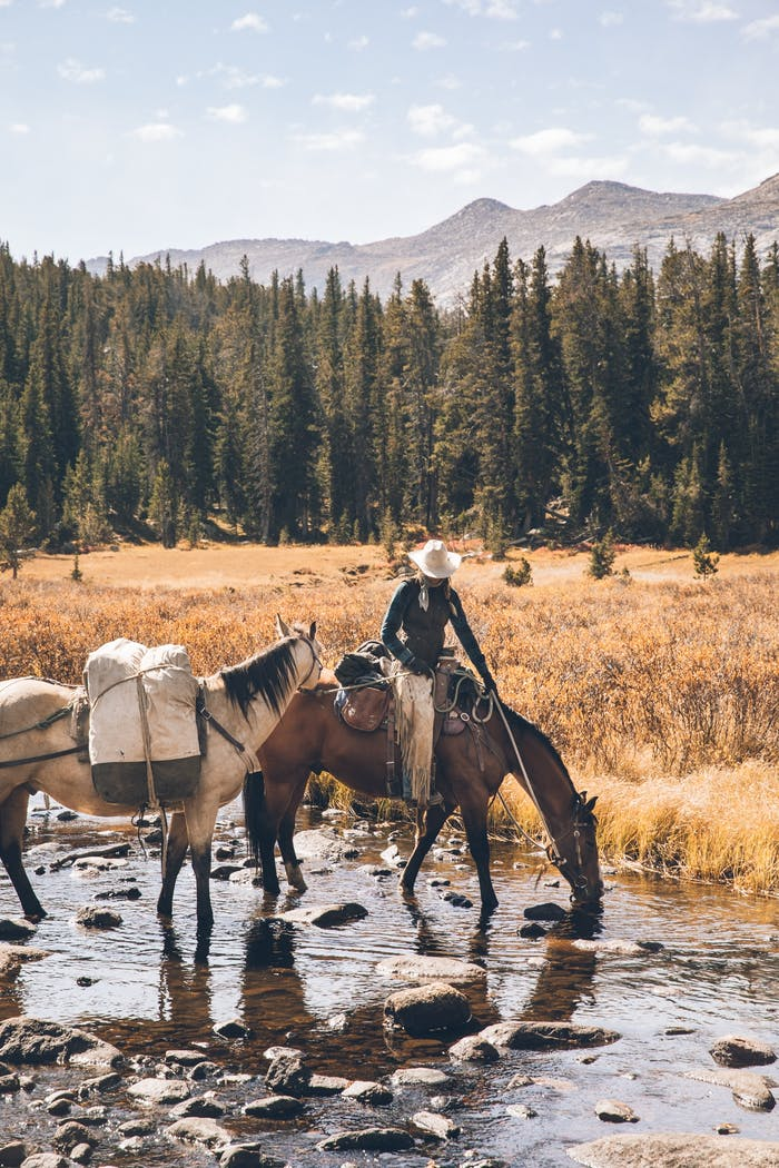 jessie with horses drinking from river in grassy field with pine trees