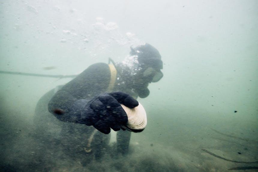 pat diving for clams
