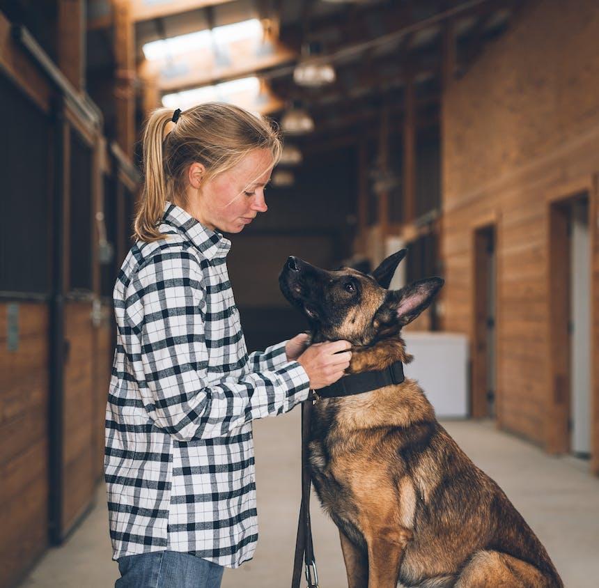 woman in plaid shirt puts collar on dog floki