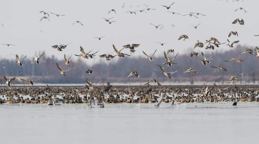 several species of ducks flying off the water